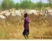 Supporting Pastoralist Livelihoods in West Africa Through Remote Sensing of Rangeland Vegetation Structure, Forage Production and Long-Term Trend Analysis